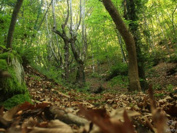 Wood - photo: Belasitsa Nature Park/Ilia Levkov