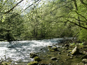At the Rila river - Photo: Rila Monastery Nature Park Directorate