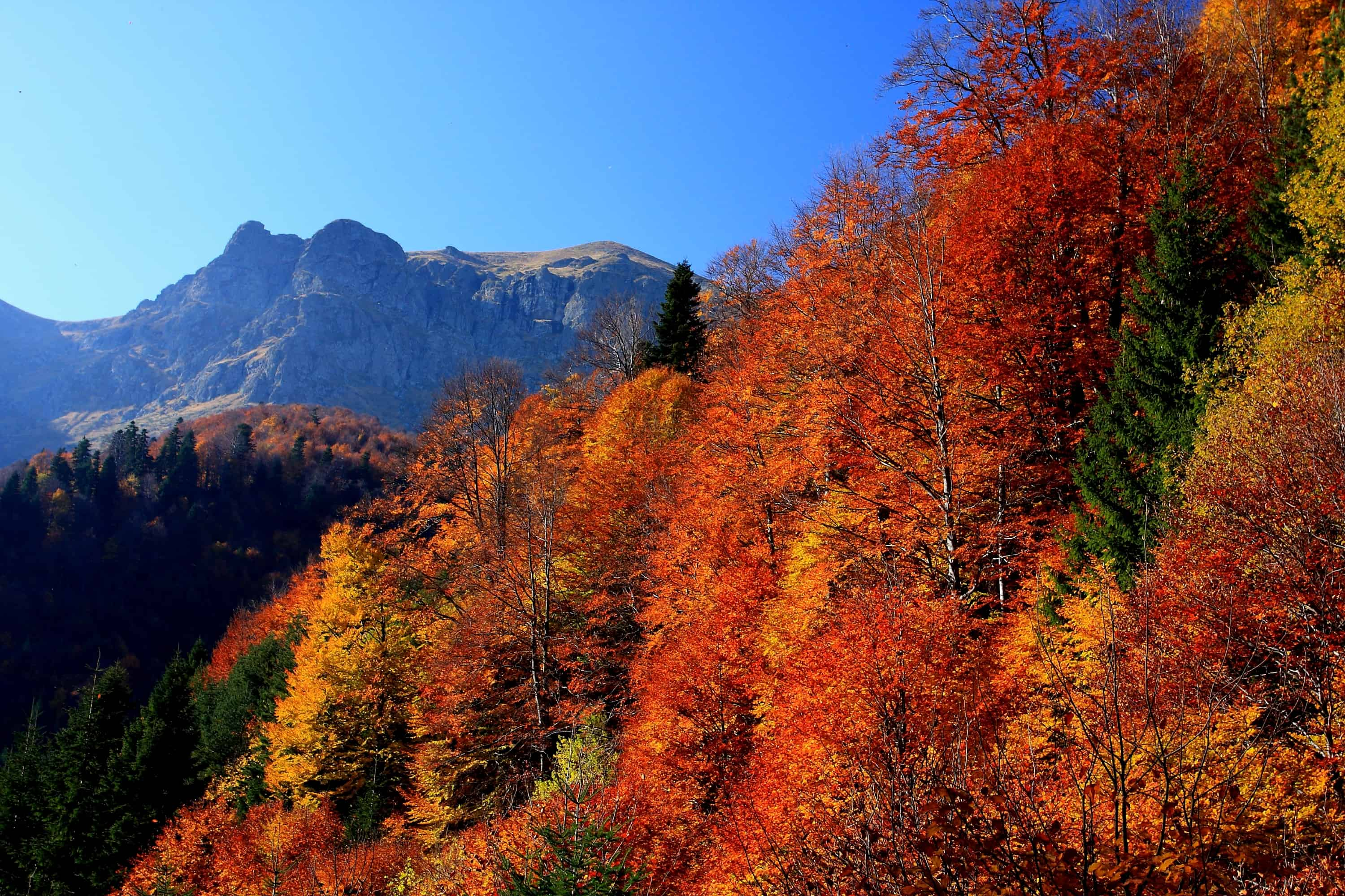 Autum in the Tazha park section - photo: Central Balkan National Park