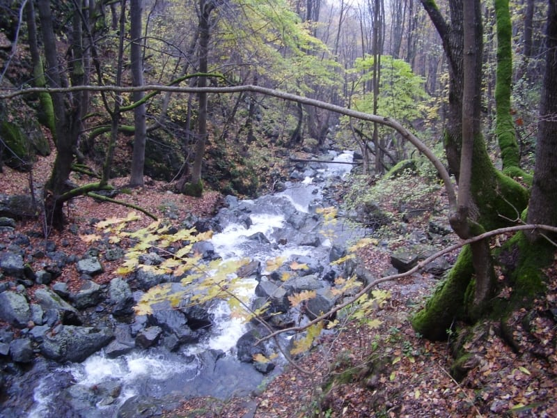Boyana river - photo: Vitosha Nature Park