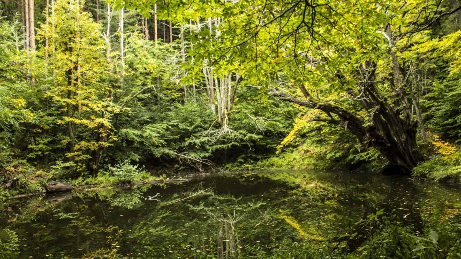 Photo: Belasitsa Nature Park/Ilia Kochev Levkov