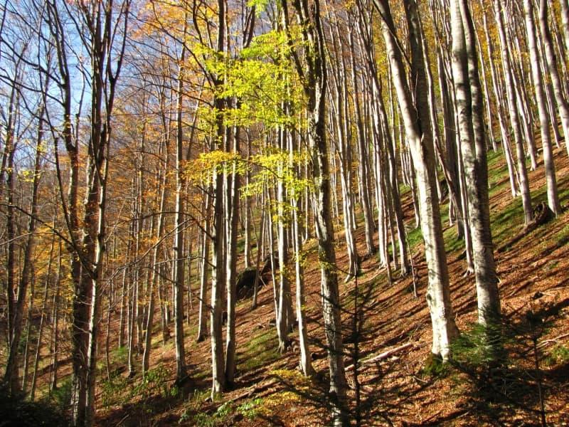 Stara reka Naturreservat - Foto: Nationalpark Zentralbalkan