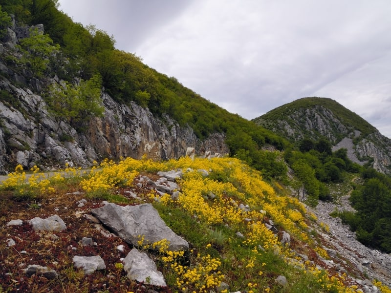 The road towards the summit of Vola - photo: Vrachanski Balkan Nature Park