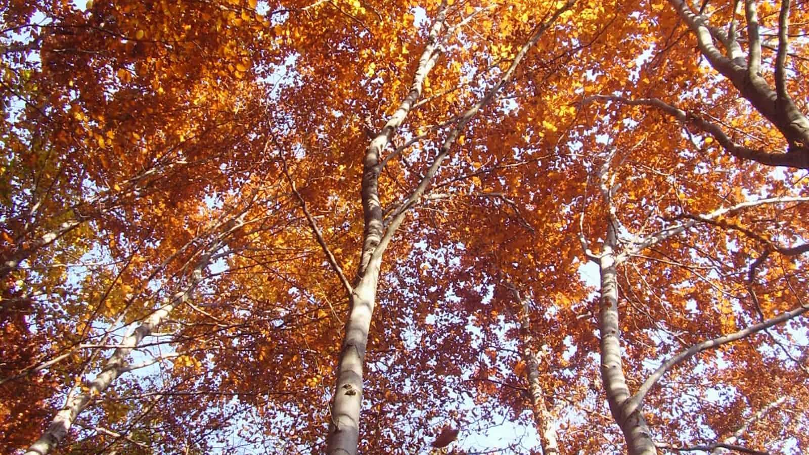 Autumn - photo: Vitosha Nature Park