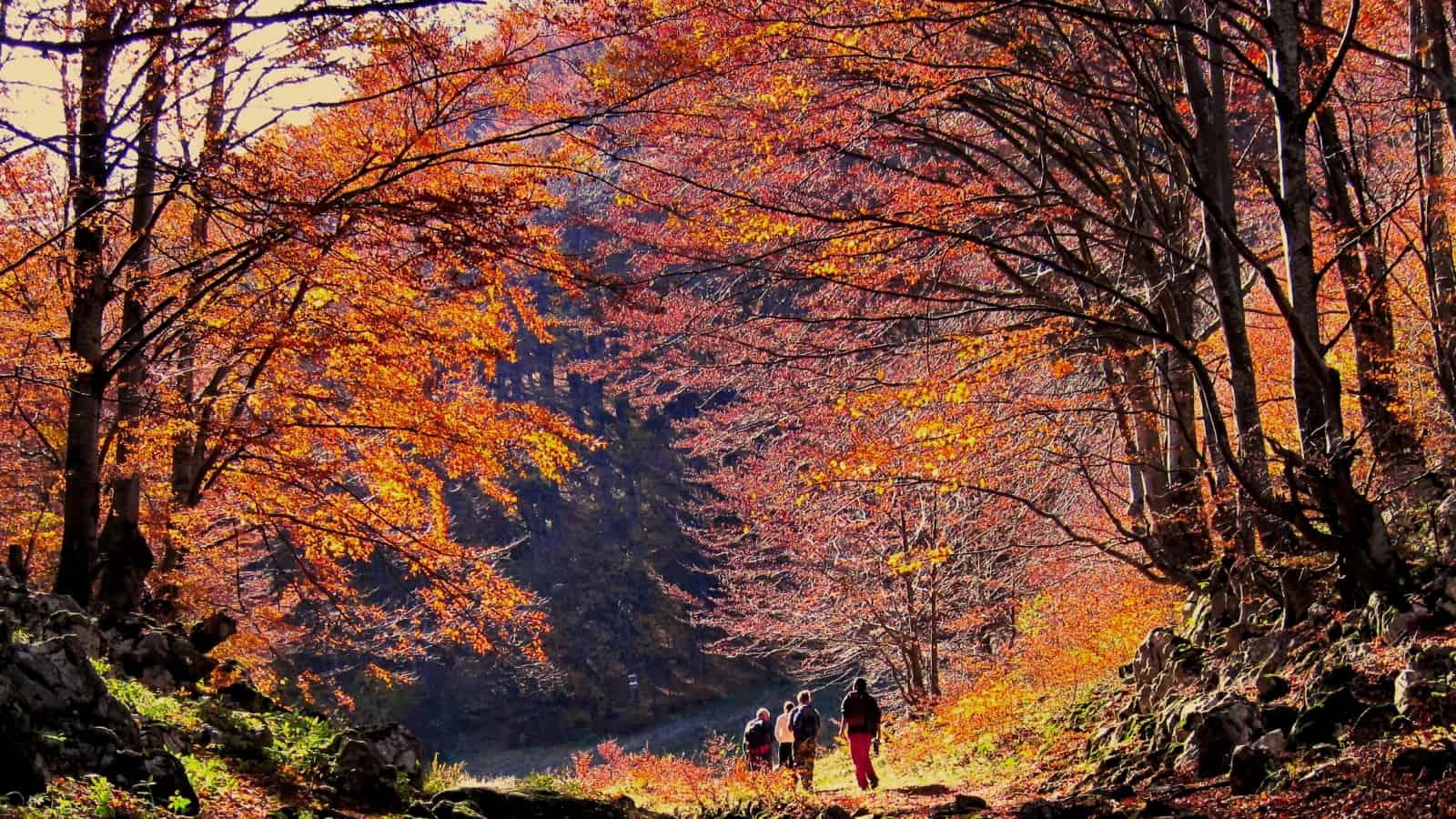 Beech forest in the beginning of the tour - photo: Vrachanski Balkan Nature Park
