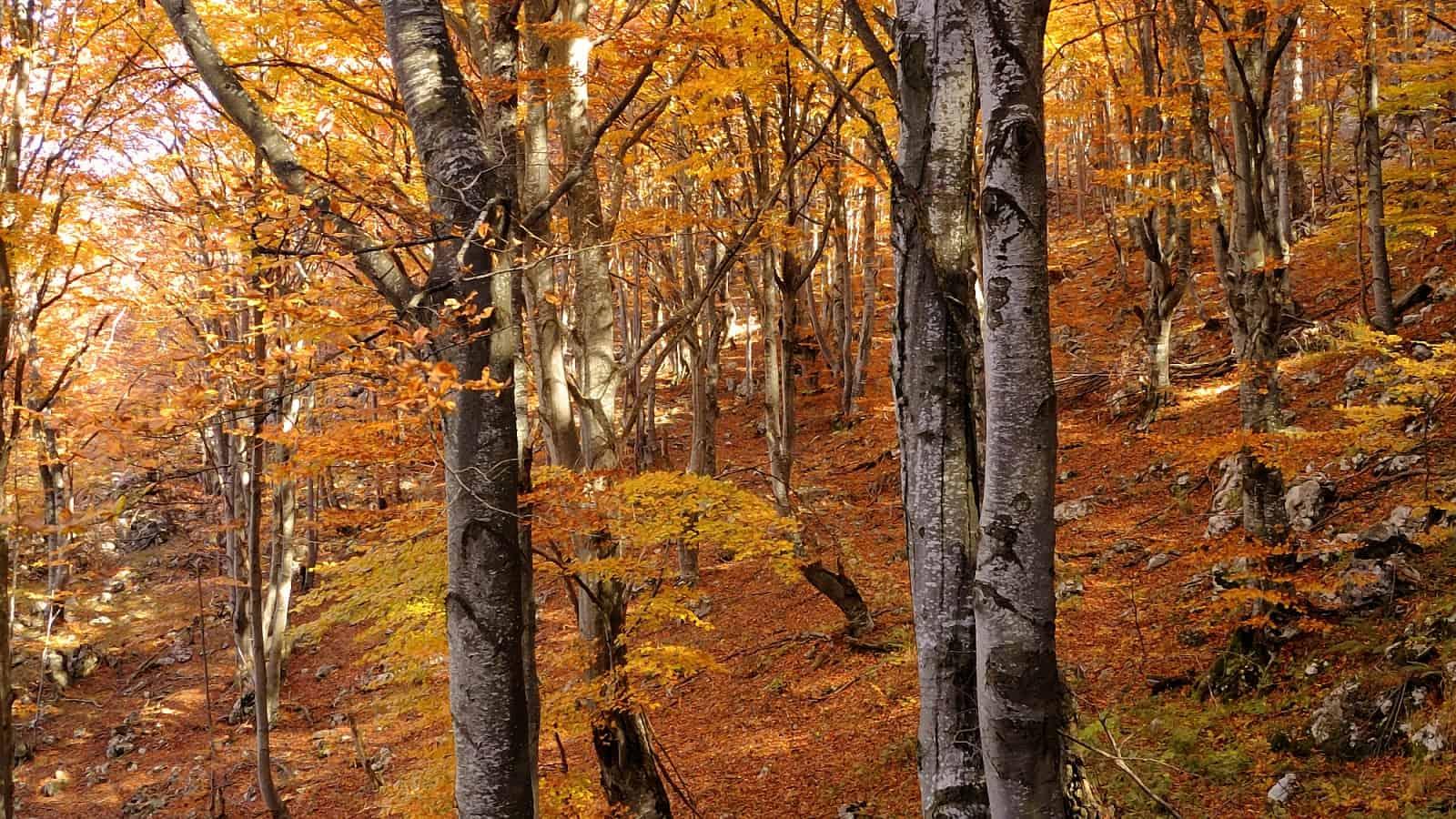 In the woods - photo: Vrachanski Balkan Nature Park