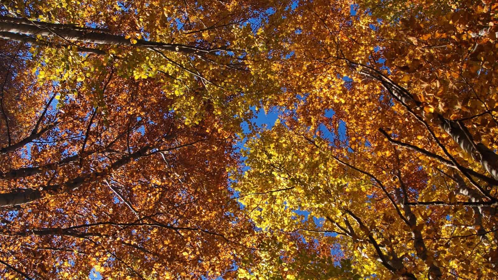Colouring of the leaves in the fall season - photo: Vrachanski Balkan Nature Park