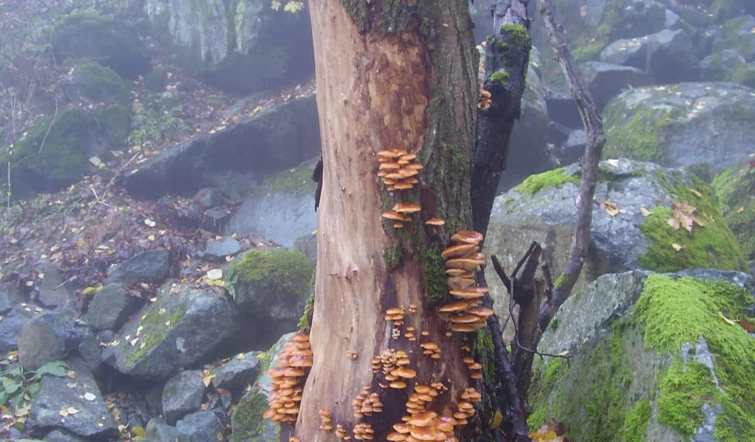 Symbiosis - photo: Vitosha Nature Park