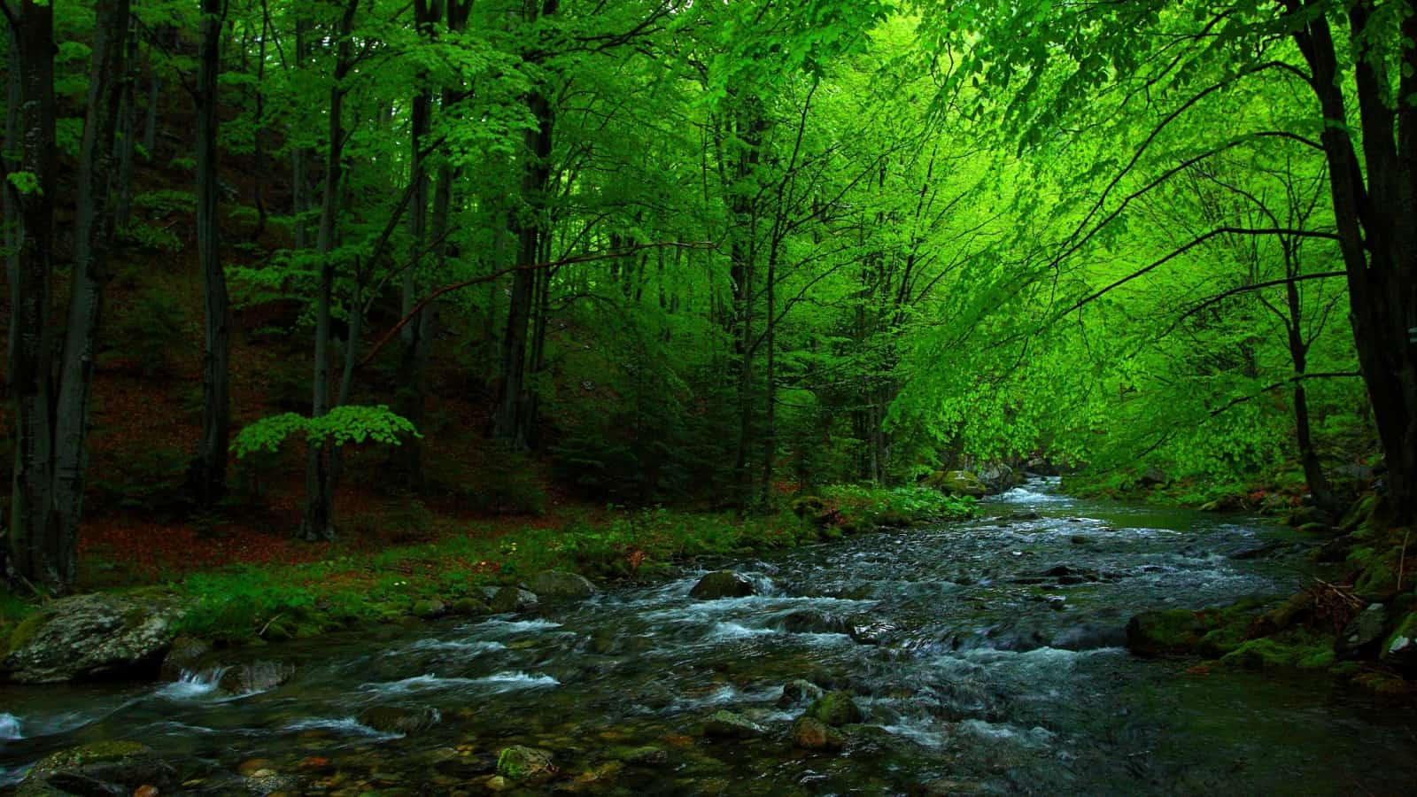 Stara reka river - photo: Central Balkan National Park